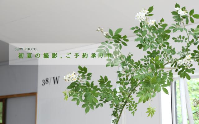 初夏.jpg